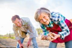 Старшие пары засаживая картошки в почву, природу весны Стоковое Фото