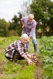 Старшие пары засаживая картошки на саде или ферме Стоковое фото RF