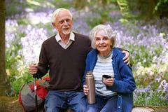 Старшие пары имея пролом на прогулке через древесину Bluebell Стоковые Фото
