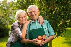 Старшие пары с яблоками Стоковая Фотография RF