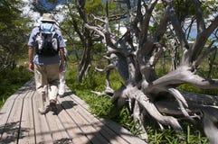Старшие туристы в природе Стоковое фото RF
