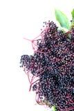 Старшие ягоды стоковое изображение