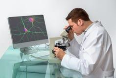 Старший мужской ученый наблюдает образцом под микроскопом стоковое изображение rf