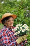Старший садовничать женщины стоковая фотография