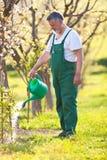 Старший садовник в его саде Стоковая Фотография RF