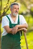 Старший садовник в его саде Стоковая Фотография
