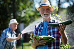 Старший человек держа свежий цукини в огороде Стоковые Фото