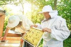 Старший beekeeper работая на его пасеке Стоковое Изображение RF