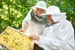 Старший beekeeper работая на его пасеке Стоковая Фотография RF