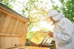 Старший beekeeper работая на его пасеке Стоковое фото RF