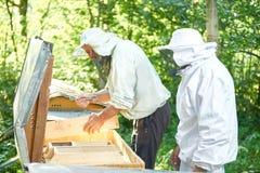 Старший beekeeper работая на его пасеке Стоковые Фотографии RF