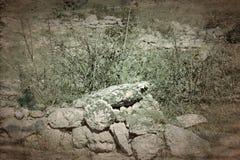 Старые археологические раскопки покинули стоковое изображение