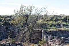 Старые археологические раскопки покинули стоковые фотографии rf