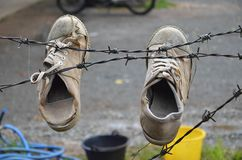 Старые ботинки пар с меньшим хамелеоном стоковое изображение