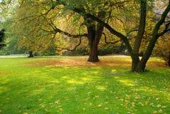 Старые валы в парке Стоковая Фотография