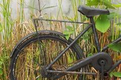 Старые велосипеды и заводы Стоковые Фотографии RF