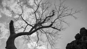 Старые дерево и хоботы стоковое изображение