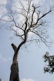 Старые дерево и хоботы стоковые изображения