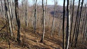 Старые деревья в лесе в горе в Европе стоковое изображение