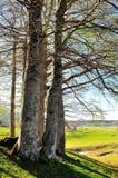 Старые деревья Стоковое Изображение RF