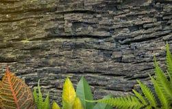 Старые древесина и природа для предпосылки Стоковые Изображения