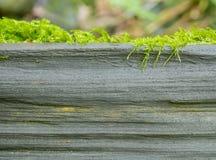 Старые дерево и мох Стоковые Фото