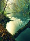 Старые деревья бука над чистой водой реки горы Большие мшистые валуны песчаника положенные в воду Первый поворот листьев к желтом стоковые фото
