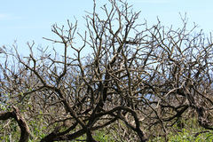 Старые деревья, сцена природы, предпосылка Стоковые Фото