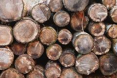 Старые деревянные журналы штабелированные в лесе, Уэльсе, Великобритании Стоковые Изображения RF