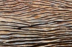 Старые деревянные текстуры Стоковая Фотография RF