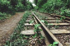 Старые железная дорога или железная дорога среди зеленых деревьев Стоковая Фотография RF
