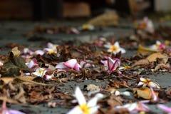 Старые листья и цветки Стоковое Изображение