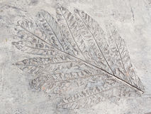 Старые лист Стоковое фото RF