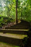 Старые и мшистые лестницы в середине леса Стоковая Фотография