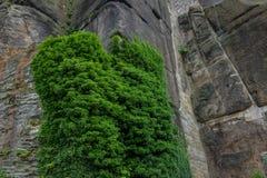 Старые каменная стена и каменная кладка с зеленым плющом Стоковое Изображение RF