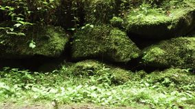 Старые каменные или скалистые обочины вдоль дороги предусматриванной с мхом, травой и растительностью в лесе живописной местности видеоматериал