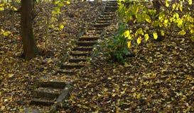 Старые каменные лестницы в лесе стоковое фото rf