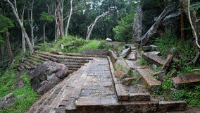 Старые каменные шаги и деревья Стоковое фото RF