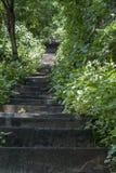 Старые каменные шаги Стоковые Изображения RF