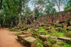 Старые камни и стена, разрушения времени и природа джунглей Стоковые Изображения