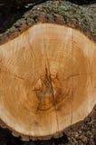 Старые кольца журнала дерева Стоковое Изображение RF