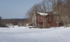 Старые красные руины амбара в поле Snowy Стоковое Изображение RF