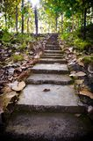 Старые лестницы в середине леса Стоковые Фото