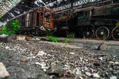 Старые поезда на покинутом депо поезда Стоковое Изображение RF