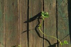 старые планки деревянные Стоковое Изображение