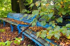 Старые рахитичные деревянные скамьи в покинутом парке Стоковое Изображение RF