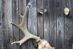 Старые рожки Стоковое Фото