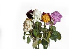 старые розы Стоковые Изображения RF