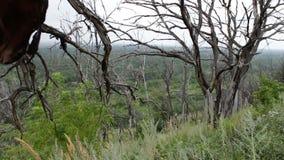 Старые сухие безжизненные деревья в тележке слайдера стрельбы леса Нечестные ветви деревьев, мистической атмосферы климат сток-видео