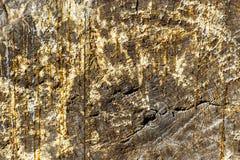Старые текстура или предпосылка хобота сосны Стоковые Фото